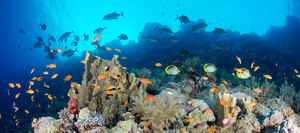 Red Sea Facts And History