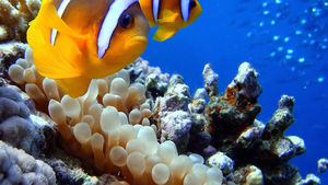 Top 9 Things To Do In Marsa Alam
