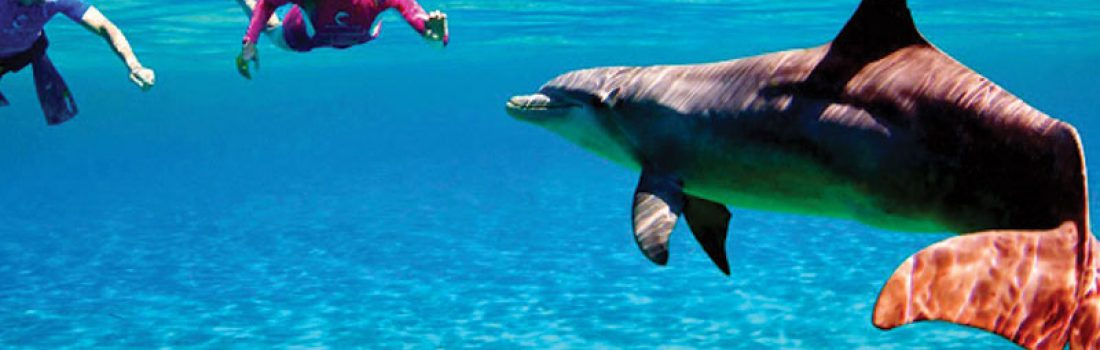 1-day Snorkeling Trip from Safaga Port
