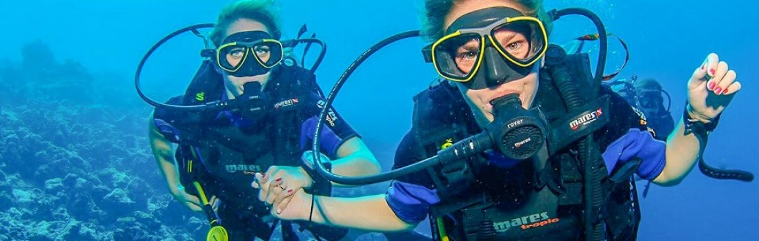 affability 1 day diving trip to hamata